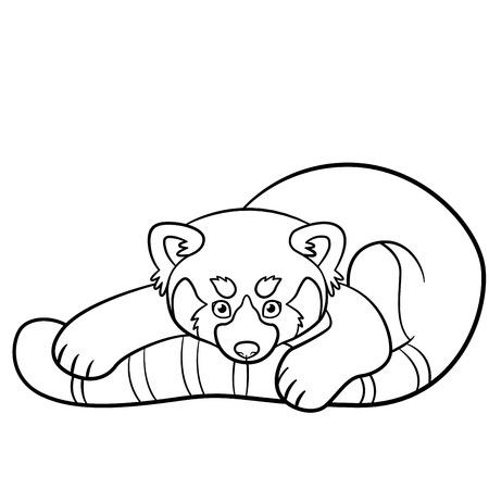 938 red panda stock vector illustration and royalty free red panda