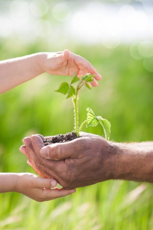 Human hands holding young plant against spring green background Ecology concept Stock Photo - 17500559