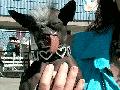 Ugly Dog @ Yahoo! Video