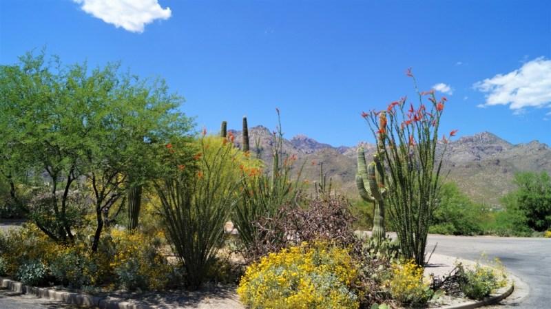 bunte Pflanzenwelt im Sabino Canyon