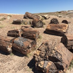 Petrified Forest National Park: fotoreportage