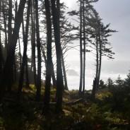 Ecola State Park: in het spoor van Lewis & Clark