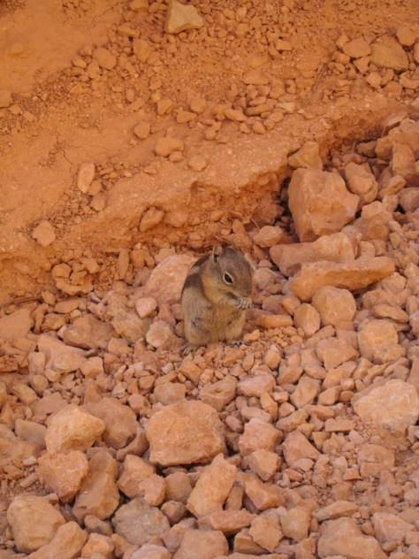 Ein Killer-Squirl - Eines der gefährlichsten Tiere des Wilden Westens!