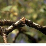 Надломы веток. Как лечить дерево?