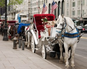 Central Park NYC | Central Park Horse Carriages