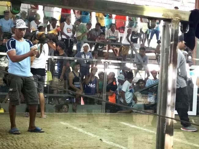 フィリピンで闘鶏場の鶏