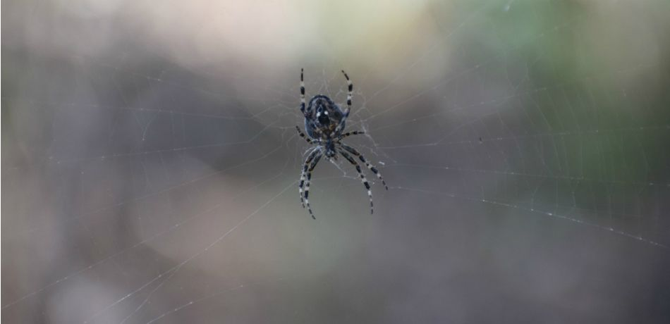 Photo of a spider handing in the air on its web.