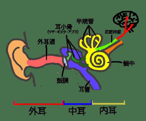 耳の仕組み