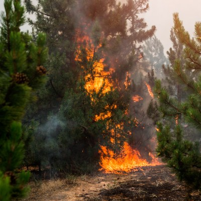 Track Box Assists with Fighting Forest Fires