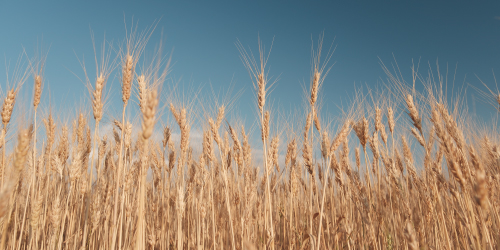 Grain Drying Communications from USAT