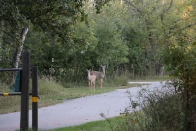Deer at Lake Bronson State Park www.usathroughoureyes.com
