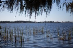 Lake Tarpon from John Chesnut Senior Park, Tarpon Springs, FL. / ©2016 Audrey Horn / www.usathroughoureyes.com