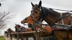 Horses Parked and Waiting. www.usathroughoureyes.com