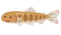 【魚類】ふ化放流で野生サケの繁殖率低下、利益より悪影響に懸念(アイルランド)