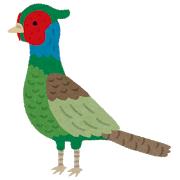【鳥】キジなど5種、日本「固有種」に =来秋「鳥類目録」記載へ=