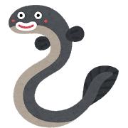 【生き物】ウナギの稚魚には魚に食べられても「エラからバックで抜け出す能力」があった!