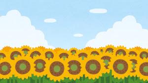 【植物】ヒマワリが成長すると「東を向きっぱなしになる」理由が解明!?