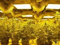 Top 5 States to Legalize Marijuana 23
