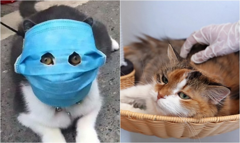 Cats Can Infect Each Other With Coronavirus