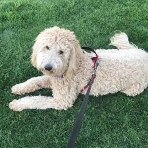 Duchess-pup5