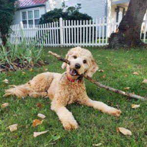 Sadie-g-pup2