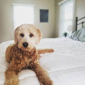Sadie-g-pup3