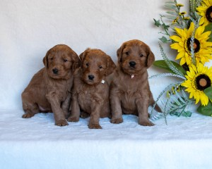 July2020-DaisyWeek5Females-3