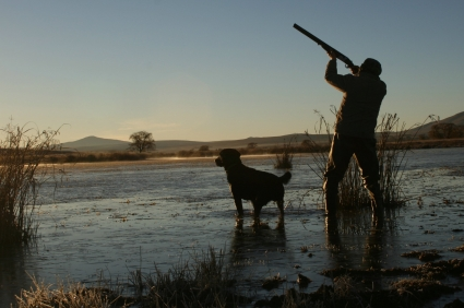 Duck  Hunting, goose hunting, hunting waterfowl
