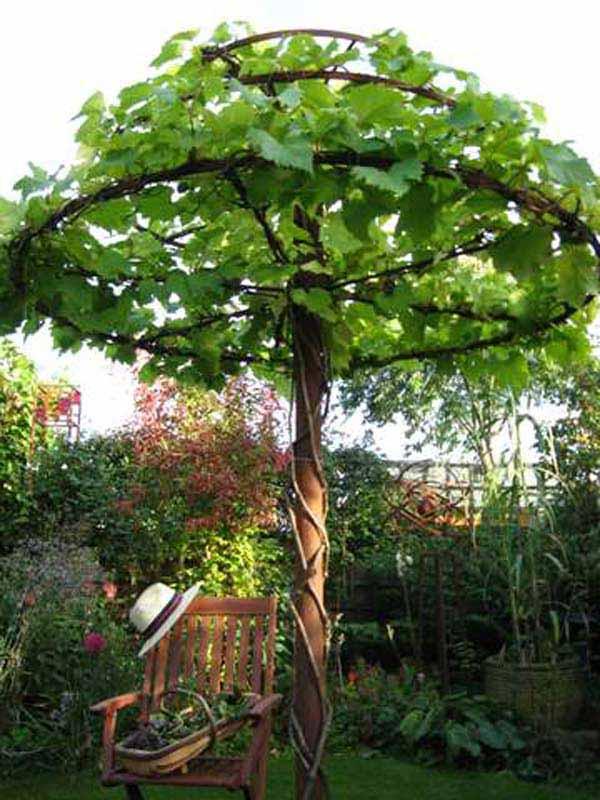 25 Beautifully Inspiring DIY Backyard Pergola Designs For Outdoor Enterntaining usefuldiyproject pergola design (9)