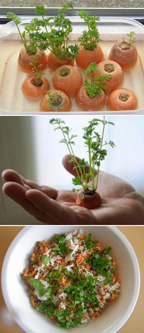 Keep Fresh Greenery At Grasp With Vegetables That Regrow From Scraps-usefuldiyprojects (14)