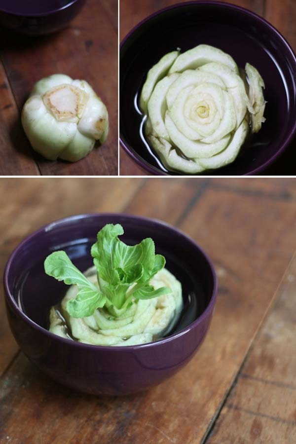 Keep Fresh Greenery At Grasp With Vegetables That Regrow From Scraps-usefuldiyprojects (6)