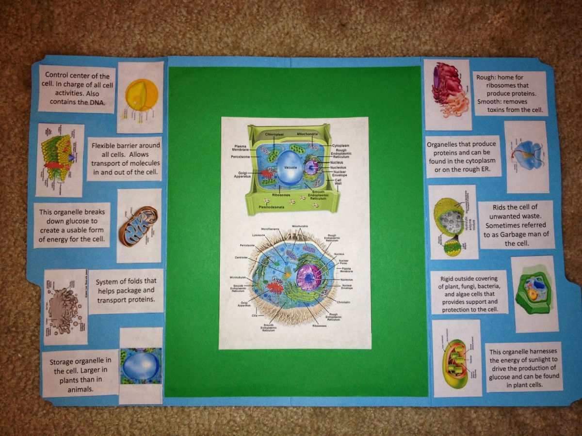 Plant Amp Animal Cells Lapbook