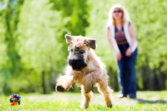 40 Fun Dog Walking Business Names