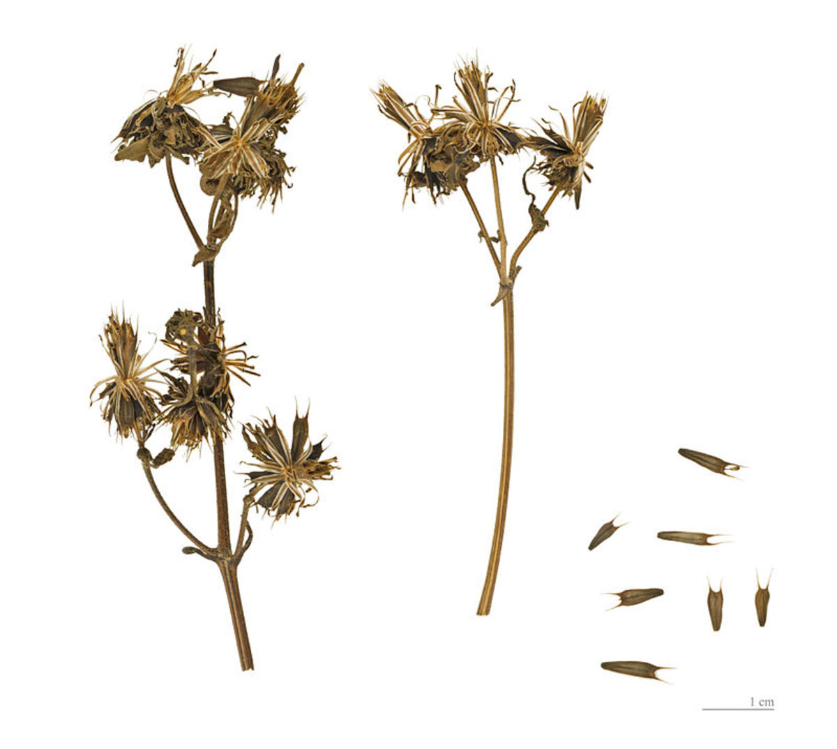 Seed Dispersal How Do Plants Spread Their Seeds