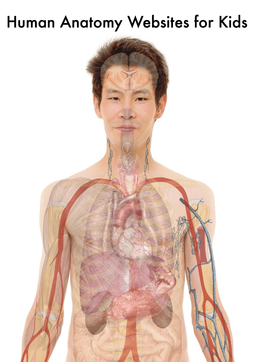 10 Terrific Human Body And Anatomy Websites For Kids
