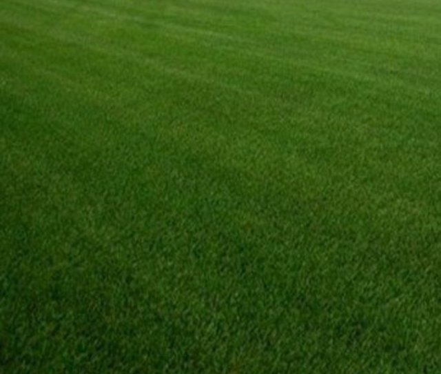 Hardy Kentucky Bluegrass Is A Great Choice For Cool Season Lawns In Ohio