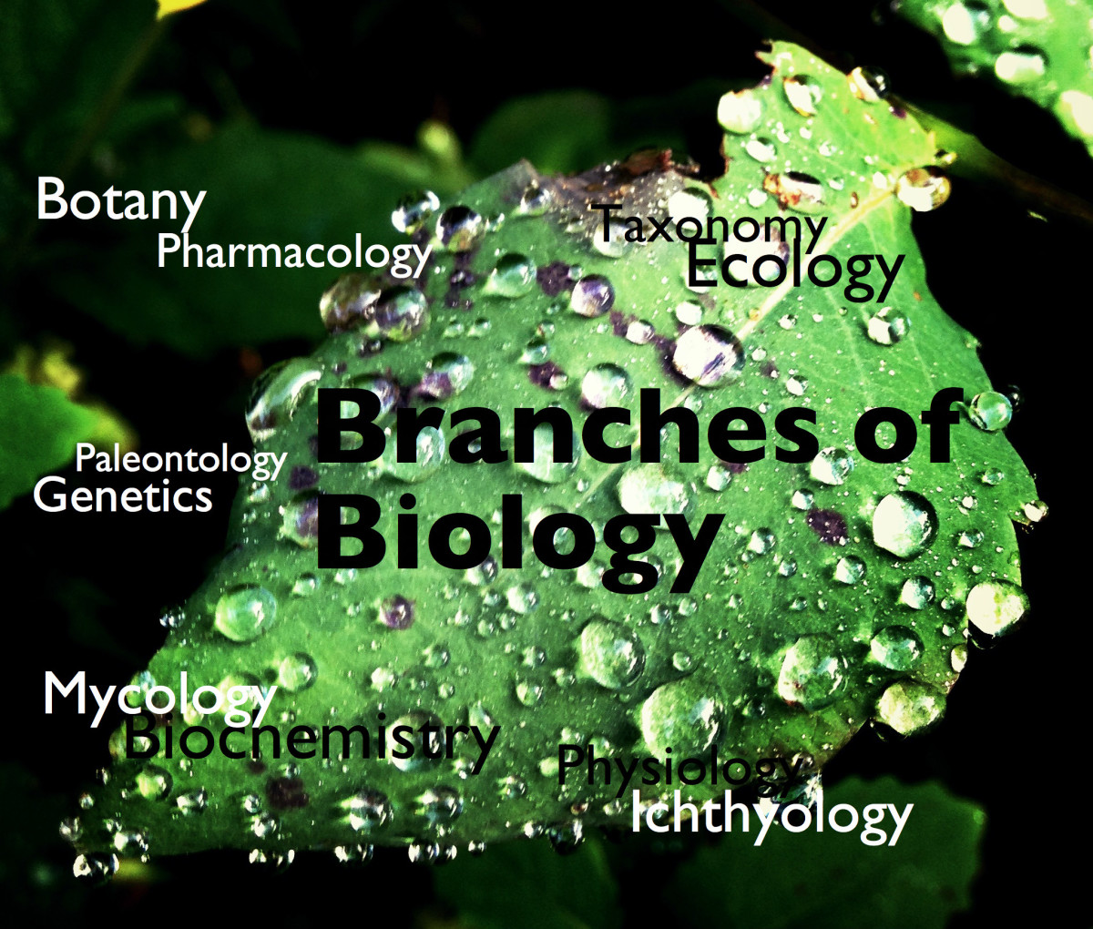 Branches Of Biology And Their Meaning