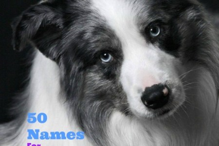 best unique dog names male and female dogs cute and unusual pembroke welsh corgi cardi b interview cardi b cosmopolitan cover please don t buy a