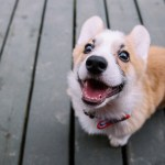 Must Haves When Getting A Puppy Pethelpful By Fellow Animal Lovers And Experts