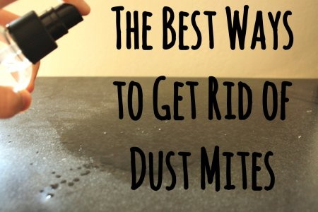 12 Guaranteed Ways to Get Rid of Dust Mites in Your House   Dengarden Dust mites are the scourge of allergy sufferers everywhere  They are  microscopic insects  not detectable to the human eye  that feed on human  and animal