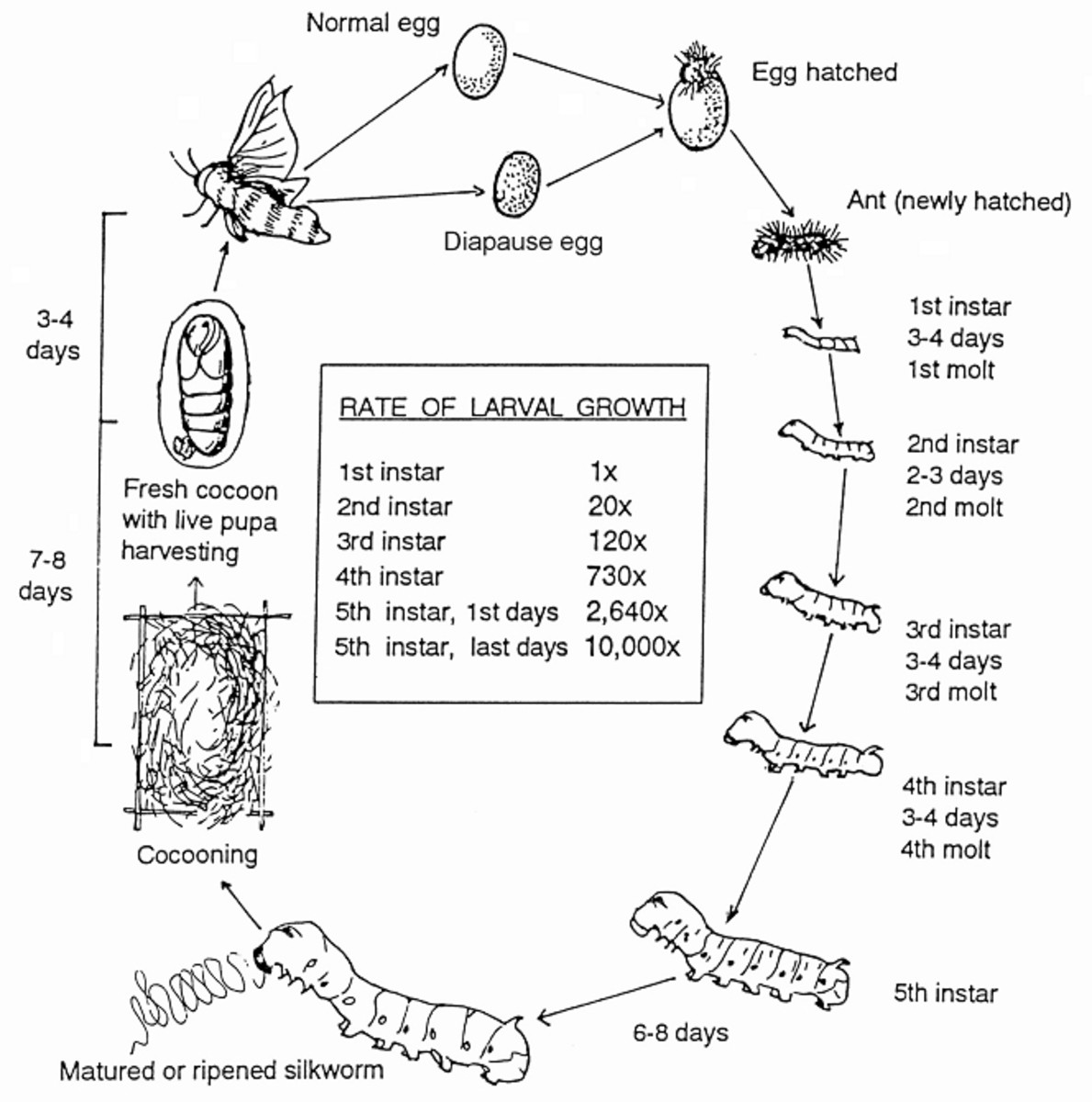 Silk Silkworm Life Cycle And How To Care For Silk