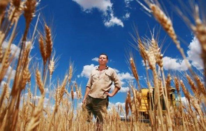 Commercial Grain Farming