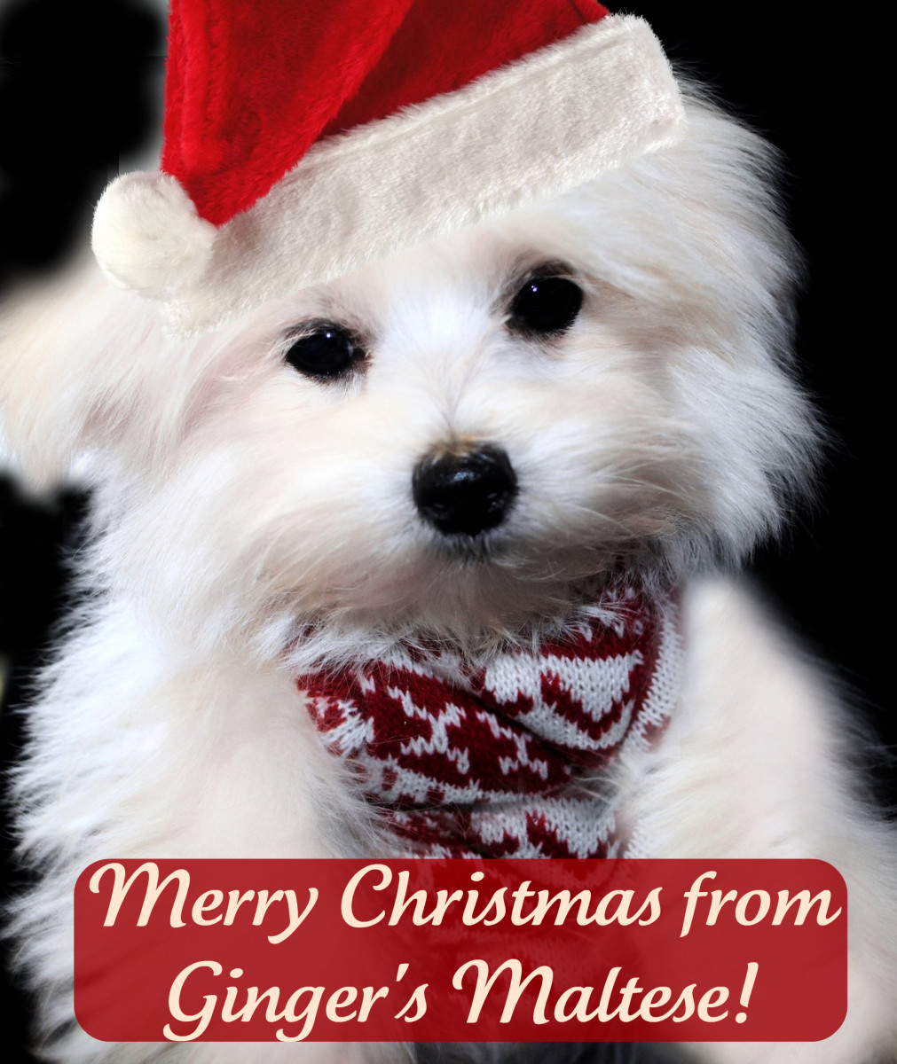 Cute Christmas Dog Names HubPages