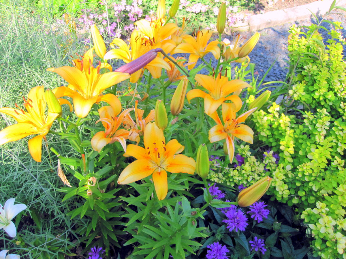 """7 Garden Design Ideas From The """"Better Homes And Gardens"""