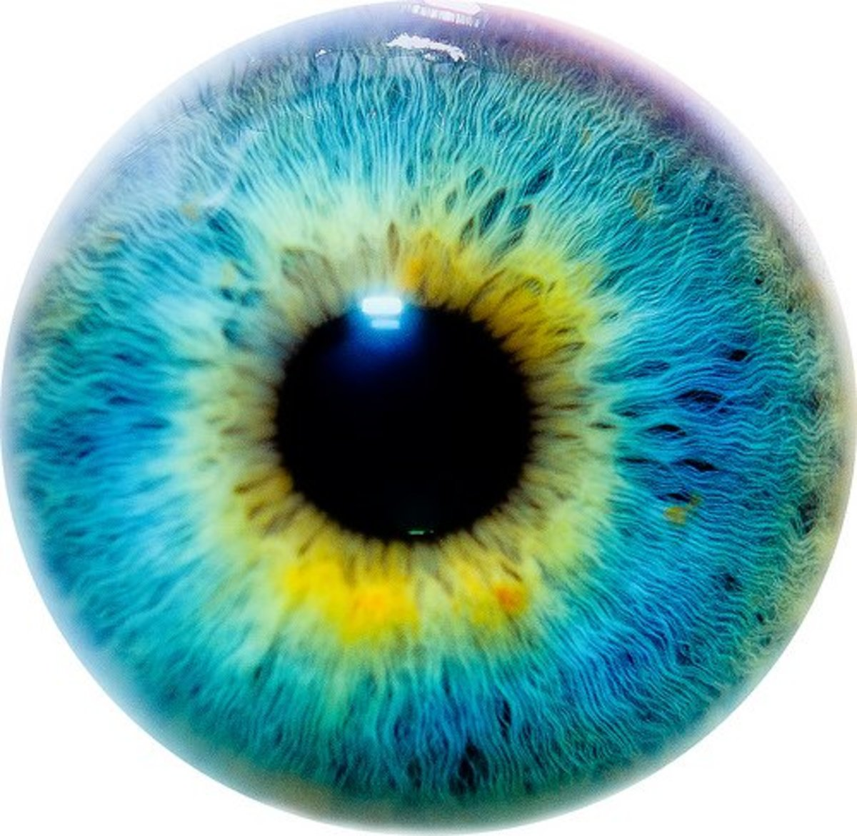 Does Eye Color Indicate Intelligence And Personality What