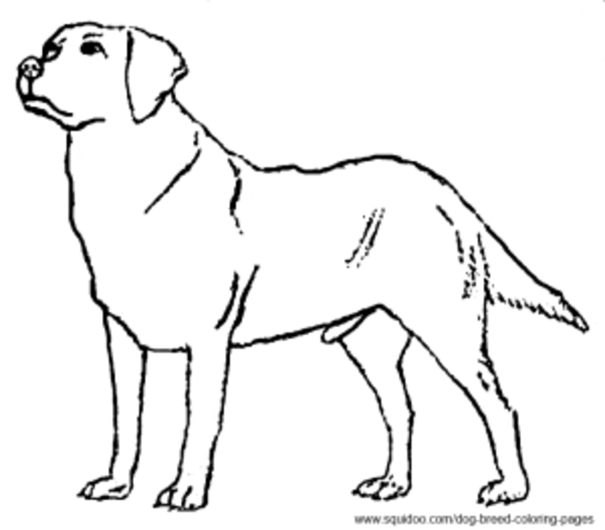 dog breed coloring pages