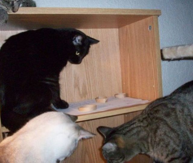 Kitties Playing With Homemade Toys