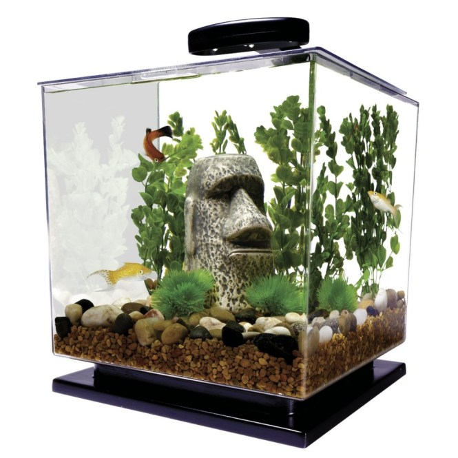 Betta Fish Tanks How To Choose The Best Aquarium For Your Pethelpful