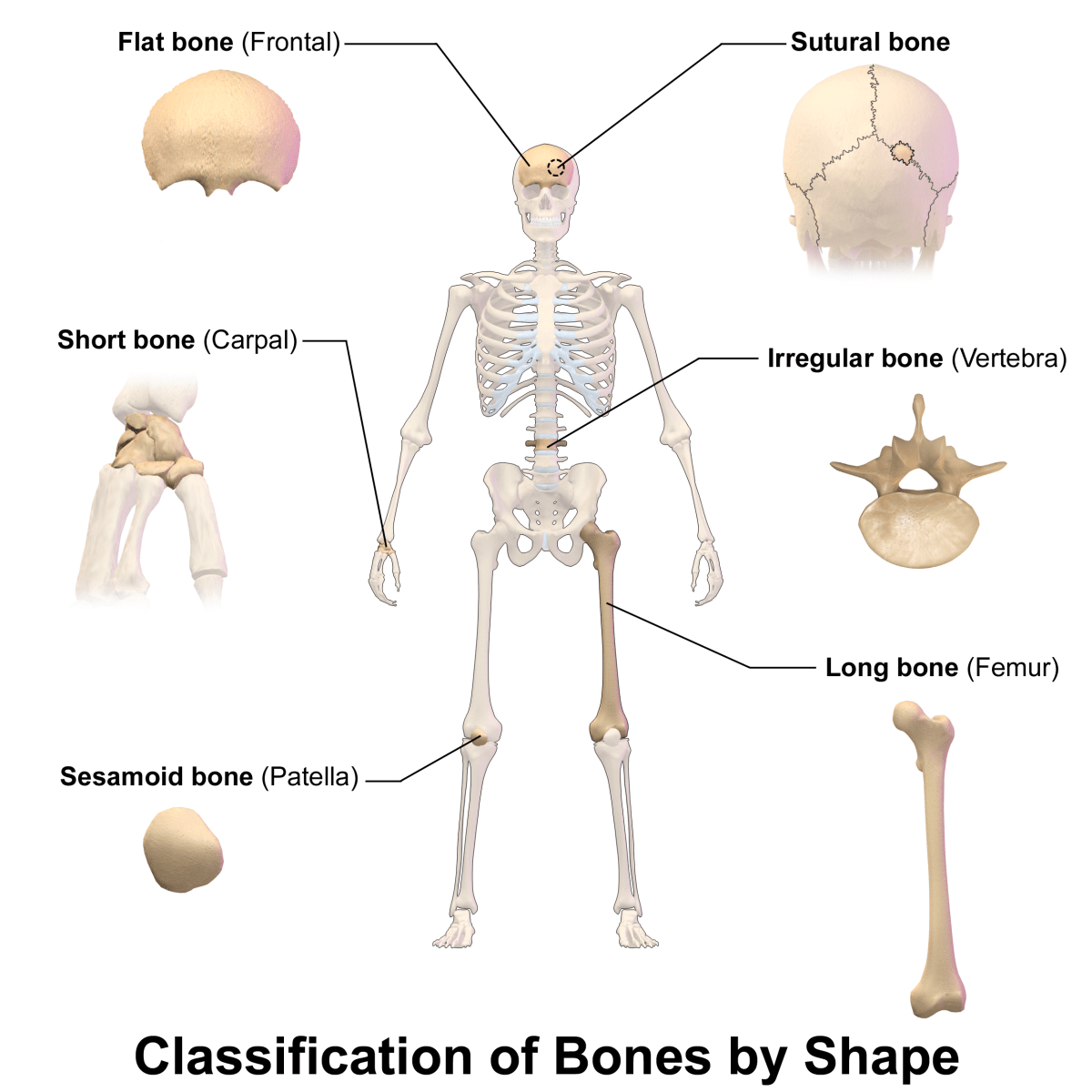 Matching Types Of Joints Worksheet