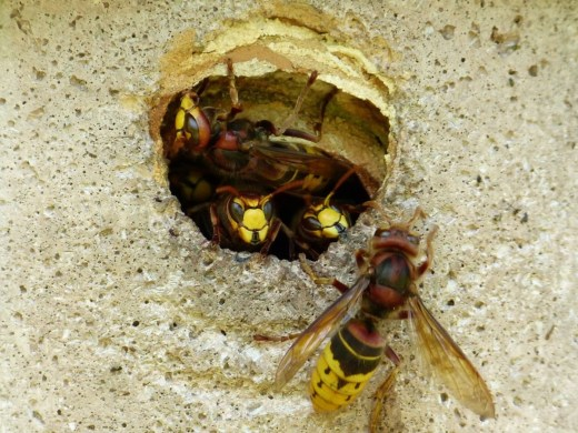 It S Not A Very Fair Fight In One Corner Is Tiny Ant The Other Large Wasp Two Hundred Times Heavier And Capable Of Flying